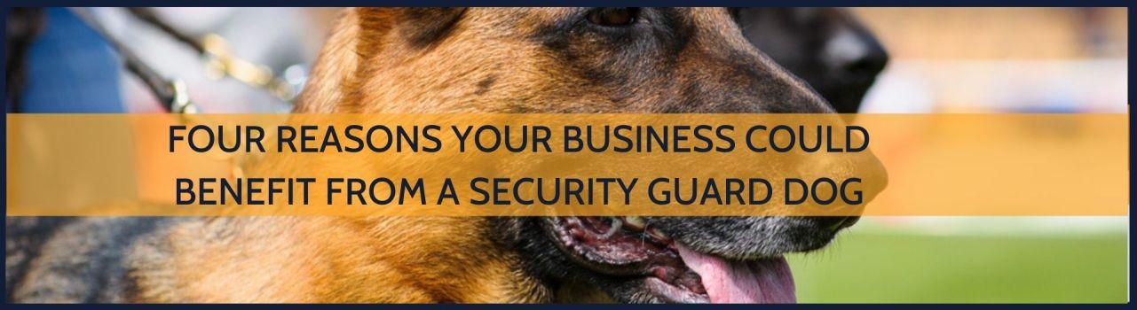 German shepherd security guard dog